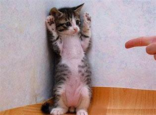 Il dito sul gatto